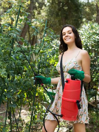 insecticidal: Female gardener spraying tomato plant  with garden spray Stock Photo