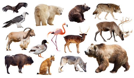Set of bear and other european animals. Isolated on white background photo