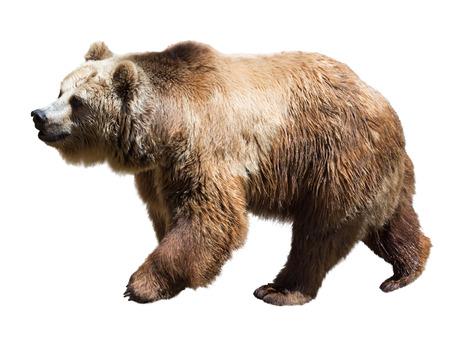 oso blanco: Oso. Aislado sobre fondo blanco Foto de archivo