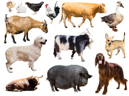 Set of dog, pig and other farm animals. Isolated over white background