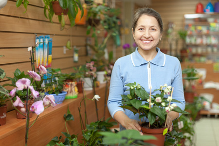 Happy mature woman looks Clerodendrum plant at flower store photo