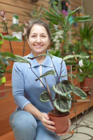 retailer: Happy mature woman with  Calathea plant in pot at flower store