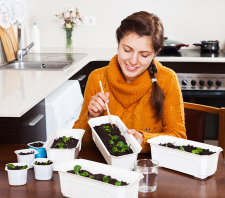 seed bed: Girl working with seedlings at table in domestic kitchen