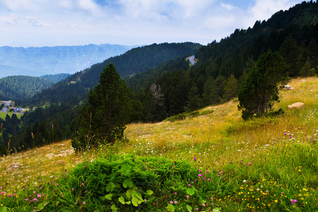 mediterranean forest: Summer view of forest  mountains landscape in august cloudy day Stock Photo