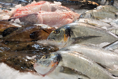 gilthead bream: Raw fresh gilt-head bream and other fish on  market counter