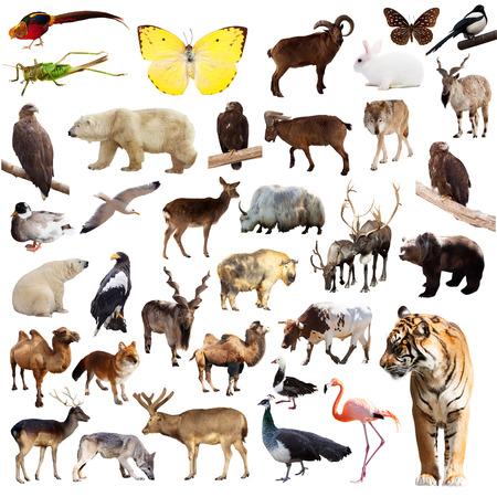 Set of asian animals. Isolated on white background photo