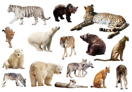 Set of  predators. Isolated on white background photo