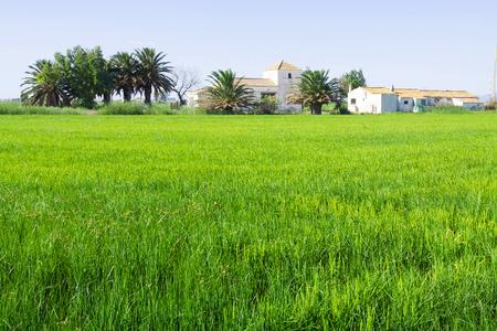 ebre: Rural landscape with rice fields at Ebro Delta. Catalonia
