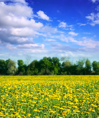 outage: Summer landscape with dandelions on green meadow