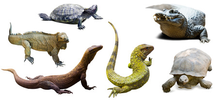 reptilian: Set of reptilian. Isolated over white Stock Photo