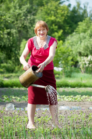 watering plant: Mature woman watering plant at vegetables garden Stock Photo