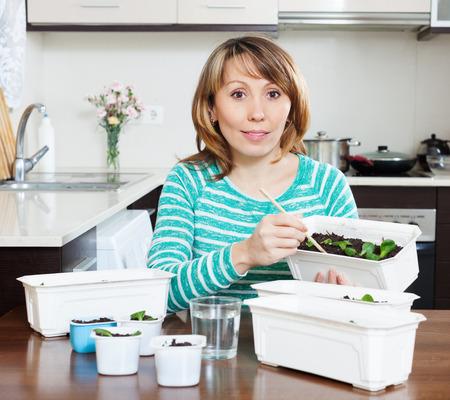 siembra: Jardinero de sexo femenino en las plántulas de siembra verdes en la cocina de casa