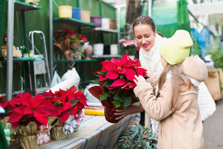 poinsettia: Smiling mom with excited child buying Christmas star flower in market. Focus on woman Stock Photo