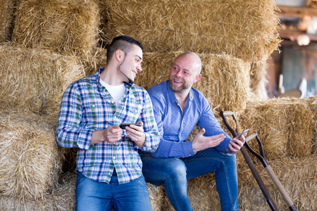 hayloft: two relaxed farm workers holding phonesin the hayloft. Focus on the right man Stock Photo