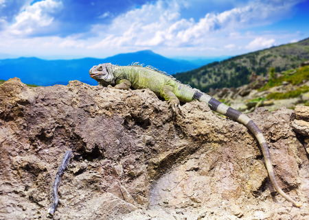wildness: lizard at wildness against mountain landscape