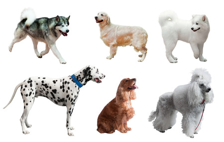 over white background: Set of dogs. Isolated over white background