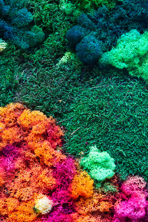 versicolor: Colorful Background. View at pityriasis versicolor and green anophyte