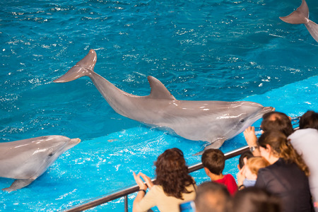 dolphinarium: BARCELONA, SPAIN - MAY 24, 2015: Dolphinarium - show with dolphins  in Zoo