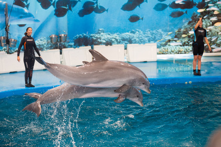 dolphinarium: BARCELONA, SPAIN - MAY 24, 2015: Dolphinarium - show with dolphins  in Zoo of Barcelona Editorial