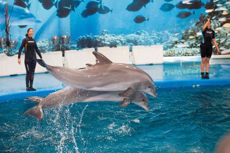 dauphin: Barcelone, Espagne - 24 mai 2015: Dolphinarium - spectacle avec les dauphins dans Zoo de Barcelone �ditoriale