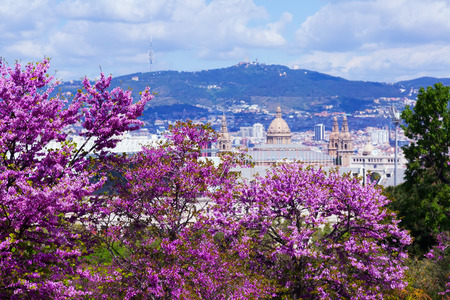 montjuic: National Palace of Montjuic in spring day. Barcelona, Catalonia