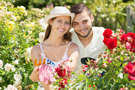 floriculturist: Smiling couple gardening together in rose garden Stock Photo