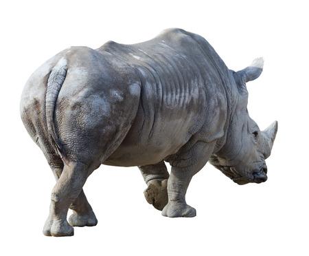 white rhinoceros over white