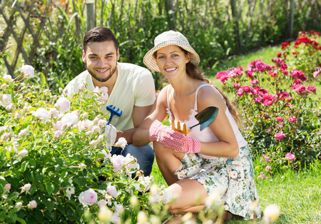 floriculturist: Young smiling couple gardening in rose garden