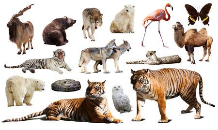 fauna: Tigre y otra fauna asi�tica. Aislado sobre fondo blanco con la sombra Foto de archivo