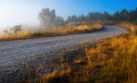 lanscape: Summer lanscape with road and pine forest in misty morning