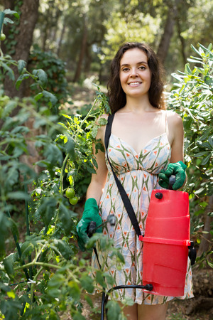 insecticidal: Happy woman caring for tomatoes in the garden
