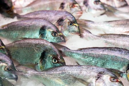 gilthead bream: Raw fresh gilt-head bream fish on mediterranean market counter Stock Photo
