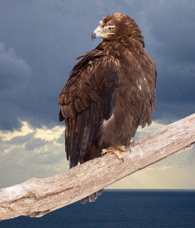 wildness: eagle sits on wood trunk against wildness background Stock Photo