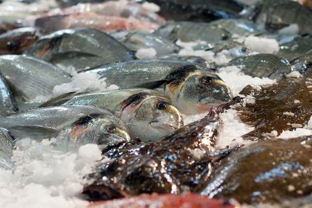 gilthead bream: Raw fresh fish at market Stock Photo