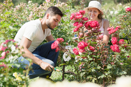 floriculturist: Happy couple planting flowers at the  garden and smiling at summer resident