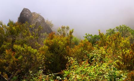galicia: Misty dawn   in summer morning.  Galicia, Spain Stock Photo