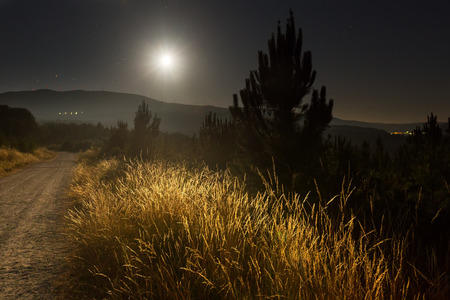 lanscape: night summer lanscape with road and pine forest in  midnight