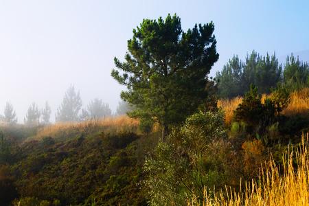 galicia: Misty landscape of Galicia  in summer