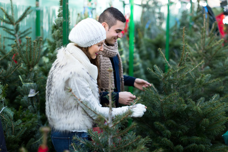 possibly: Young people buying New Year tree at market. Possibly a couple or a husband and a wife. Selective focus. Focus on woman