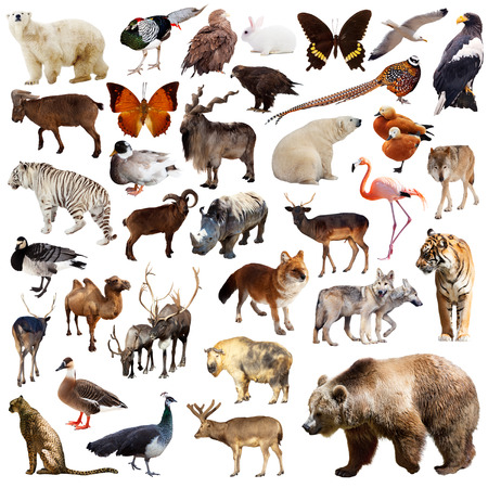 Brown bear and other asian animals. Isolated on white background Stock Photo