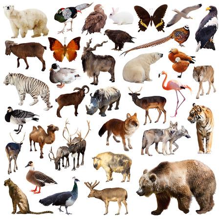 Bruine beer en andere aziatische dieren. Geïsoleerd op witte achtergrond Stockfoto