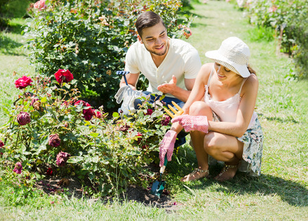 Young family gardening together in rose garden