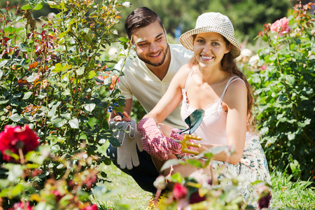 family gardening: Smiling family gardening together in rose garden