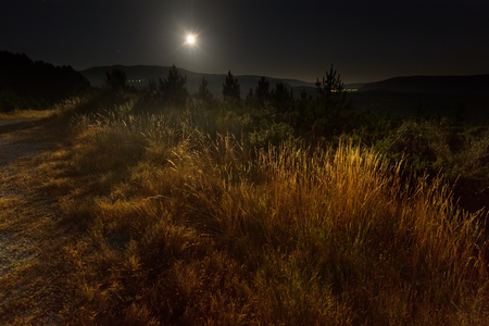 nighty: nighty lanscape with grass and full moon