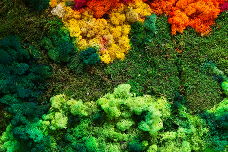 Gifts of nature: colorful lichen and green moss