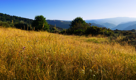 sil: Mountains landscape with tall grass  in summer evening.  Galicia, Spain
