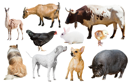 billygoat: Set of dogs and other farm animals. Isolated