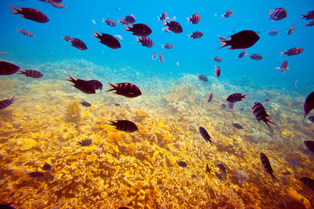 red coral colony: Photo of tropical fishes on coral reef area Stock Photo