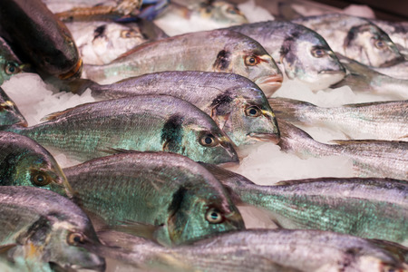 gilthead bream: Gilt-head bream on spanish market