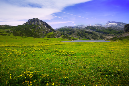 covadonga: Summer  landscape with lake and pasture.  Lakes of Covadonga.  Asturias